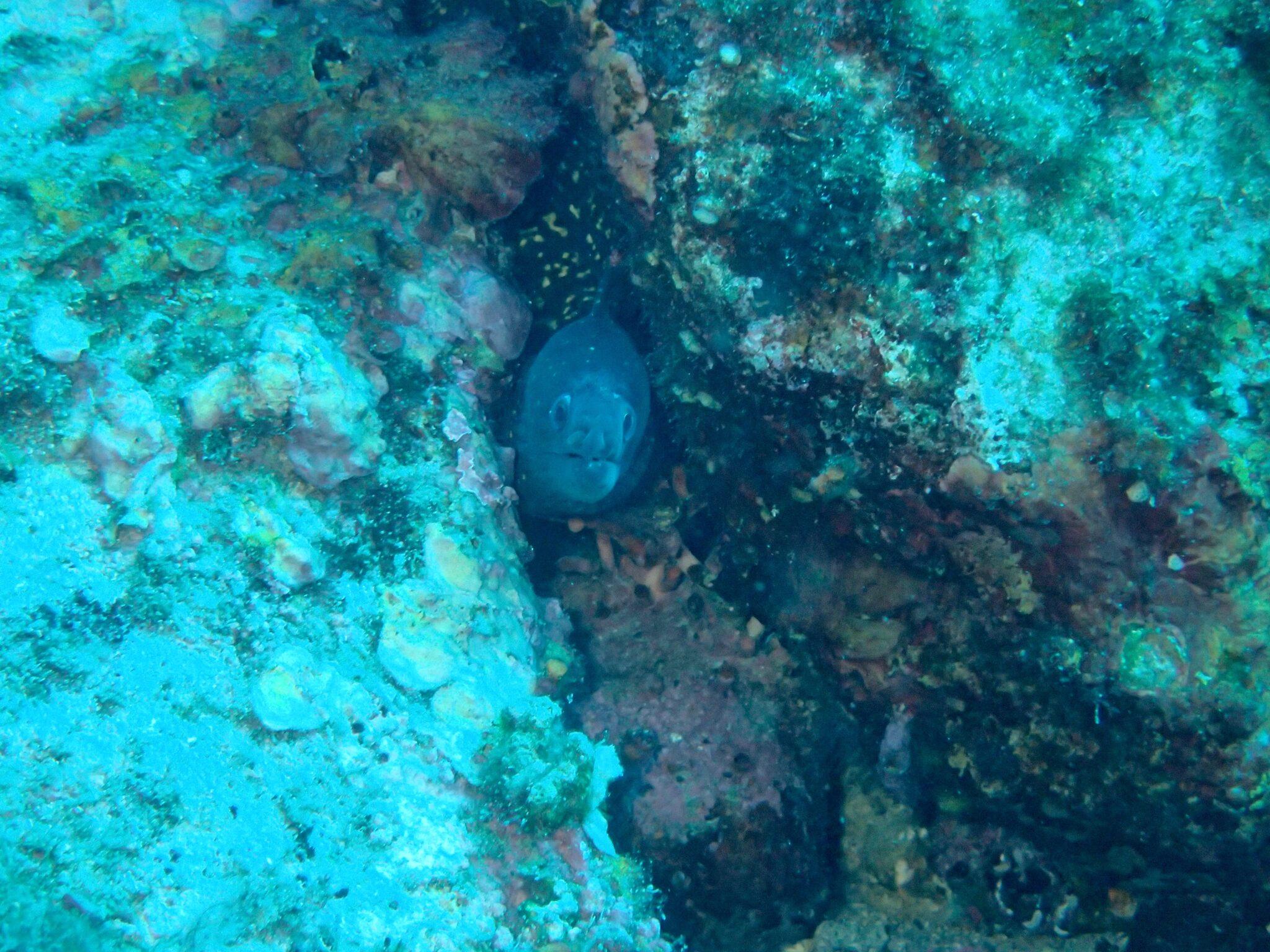 Murène à Crau de Nao avec le plongée Aigle Nautique