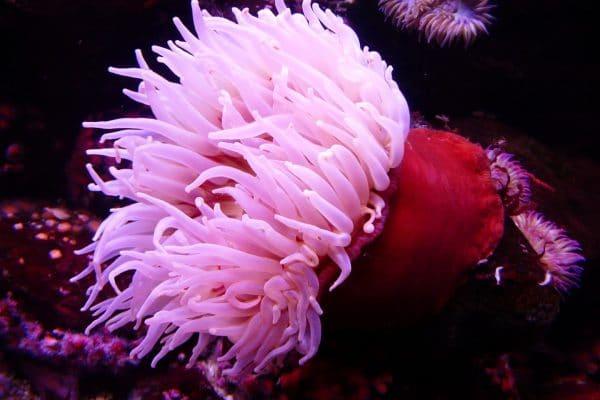 anémone de mer des couleurs fabuleuses