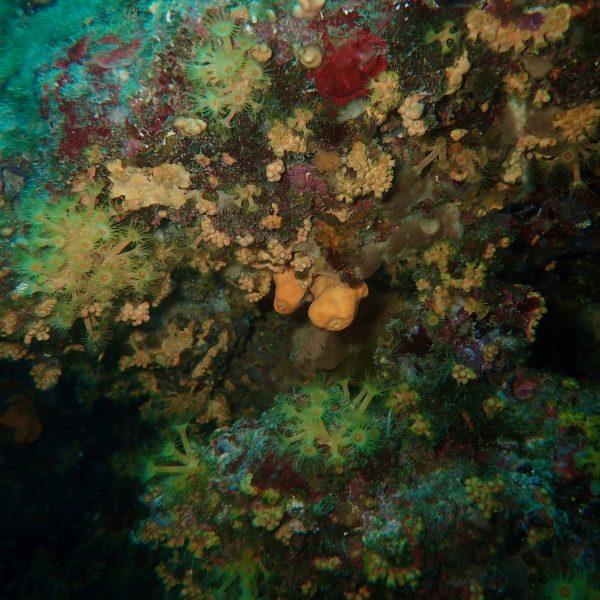 La Grotte à corail à Villefranche
