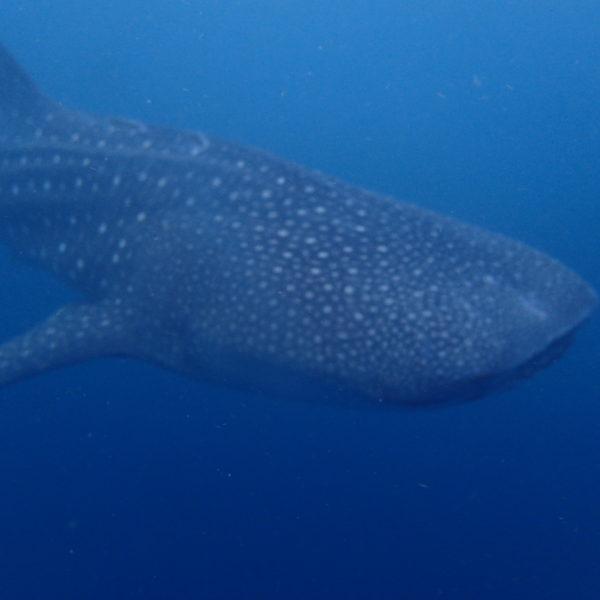 Blog plongée sous marine