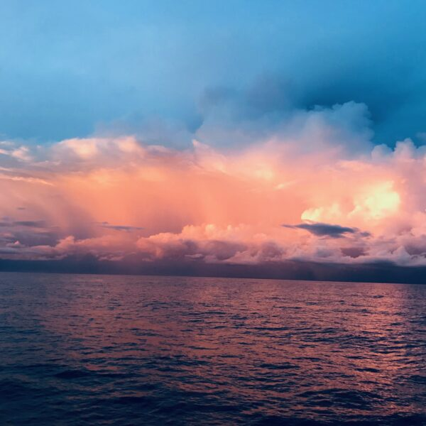 Tubbataha Reef un site magique pour plonger aux Philippines