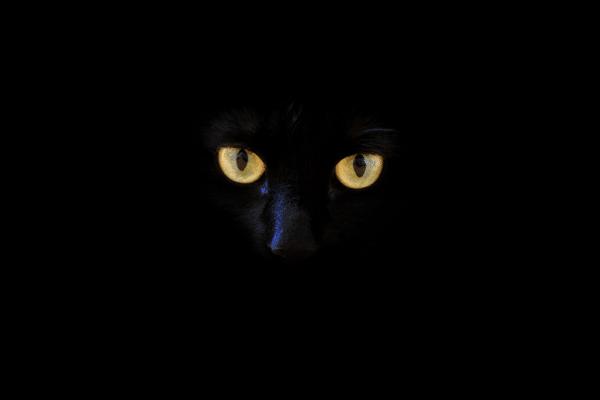 chat noir, anecdotes