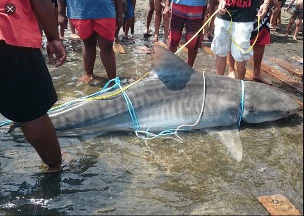 requins Réunion