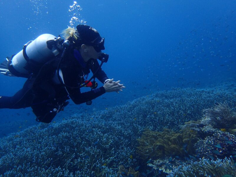 meilleurs spots de plongée