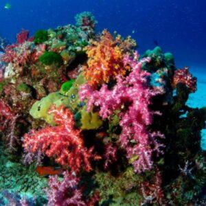 Richelieu Rock : meilleurs spots de plongée