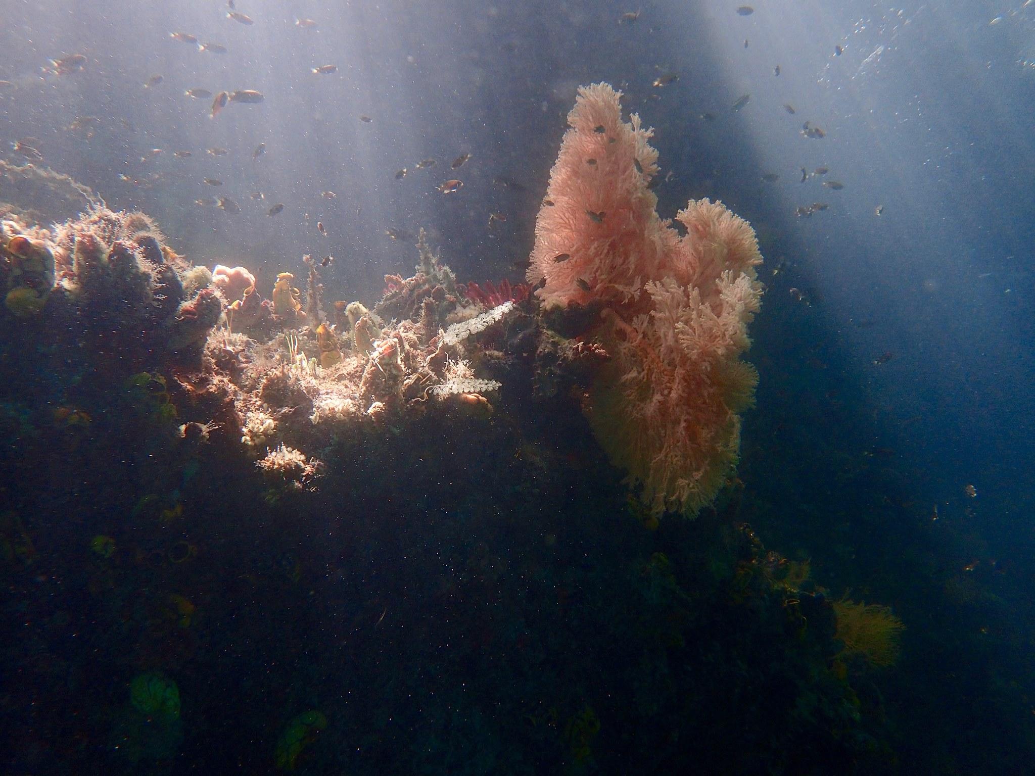 photo sous marine éclairage