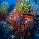 Belle photo sous marine