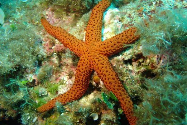meilleurs sites de plongée en Méditerranée